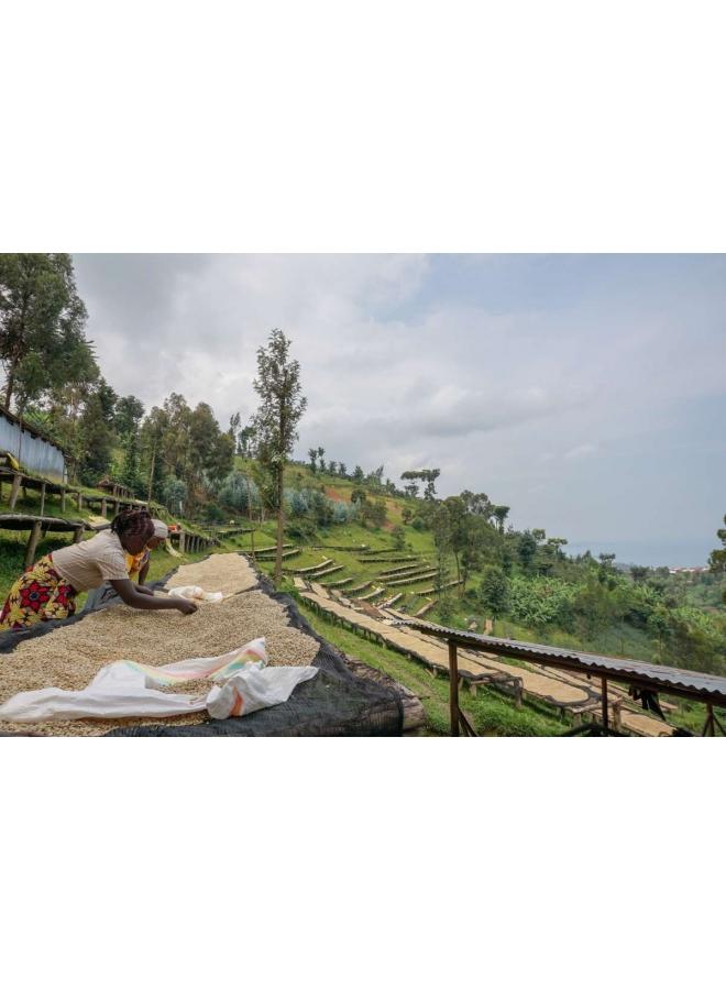 Rwanda - COOPAC Kabirizi Washing Station
